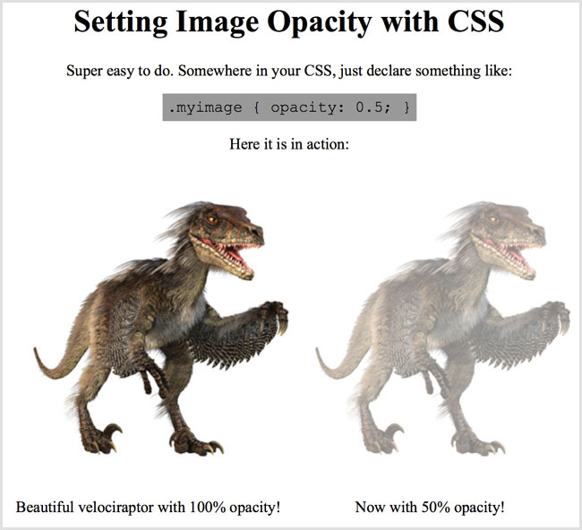 Image opacity using CSS